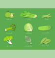 set of green vegetables collection vector image
