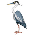 Crane with gray feather vector image vector image