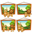 Four photo frames of lion family vector image vector image