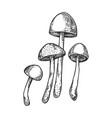 narcotic mushroom engraving vector image vector image
