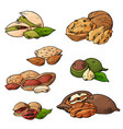 nuts and seeds collection hand drawn vector image vector image