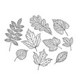 set leaves nature foliage sketch decorative vector image vector image
