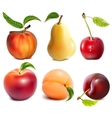 Collection of fruits vector image