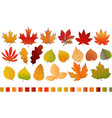Different color autumn leaves collection Leaves vector image