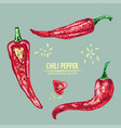 digital detailed line art chili vector image