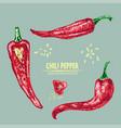 digital detailed line art chili vector image