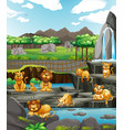scene with animals at zoo vector image