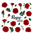 set collection red roses and leaves realistic vector image vector image