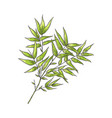 bamboo branch with green leaves in sketch style vector image