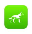shepherd dog icon digital green vector image