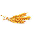 Wheat isolated on white vector image