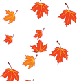 autumn leaves isolated on white vector image vector image