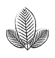 plant ecology symbol vector image vector image