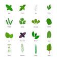 set culinary herbs vector image vector image