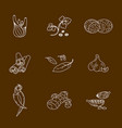spices set contour icons vector image
