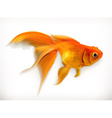 Goldfish realistic vector image