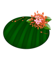 Beautiful Red Ixora Flowers on Banana Leaf vector image vector image