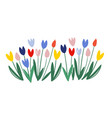 color tulips isolated on white background vector image vector image