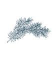 elegant detailed botanical drawing of fir branch vector image vector image