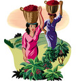 girls with baskets of coffee vector image vector image