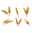 golden wheat ears and grains realistic set vector image vector image
