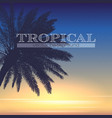 palm tree at tropical coast silhouette vector image vector image