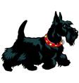 scottish terrier vector image vector image