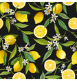 Seamless Pattern Lemon Fruits Background Floral vector image vector image