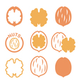 Walnut nutshell icons set vector image