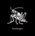 a grasshopper on black background vector image vector image