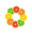 Citrus ring vector image vector image