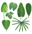 Different shape of leaves Set 2 vector image vector image