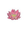 lotus - hand drawn pink water vector image vector image