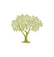 tree trunk green crown with olive leaves isolated vector image