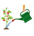 hand watering money fruit tree with can vector image vector image