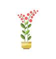 house plant indoor flower in pot elegant home vector image vector image