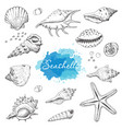 isolated seashells on a white background vector image vector image