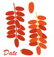Date Fruit vector image vector image