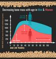 decreasing bone mass vector image vector image