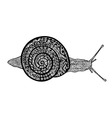 Hand drawn snail on white background vector image vector image
