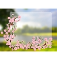 Oriental style painting cherry blossom in spring vector image vector image