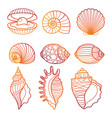 seashells colorful outline seashell set vector image