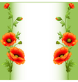 background with bright flowers poppy vector image vector image