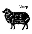 cut of sheep diagram for butcher sheep cut vector image