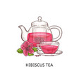 hibiscus tea - pink drink in glass cup and teapot vector image vector image