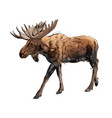 moose from a splash watercolor colored drawing vector image vector image