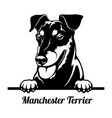 peeking dog - manchester terrier breed - head vector image vector image