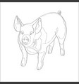 pig line vector image vector image