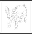 pig line vector image