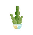 spurge cactus house plant indoor flower in pot vector image